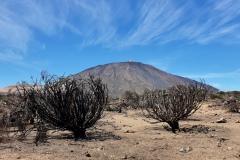 Krajina pod Pico del Teide