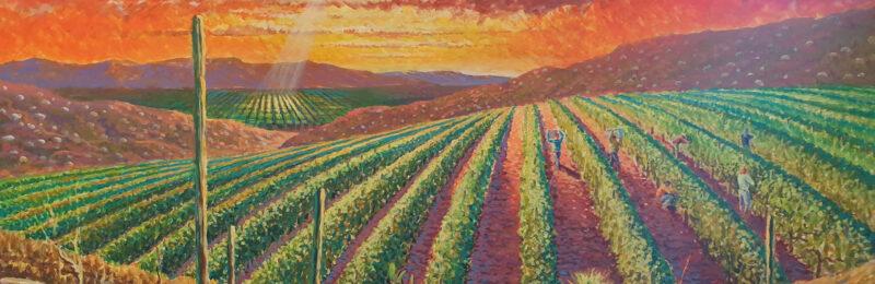 Obraz - kalifornské vinice